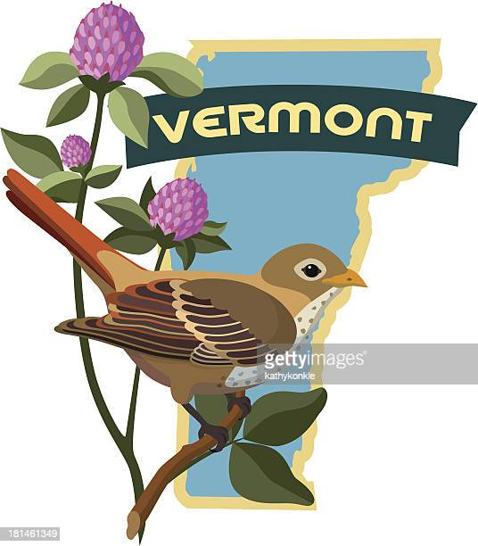 vermont state bird and flower - luggage tag stock illustrations, clip art, cartoons, & icons