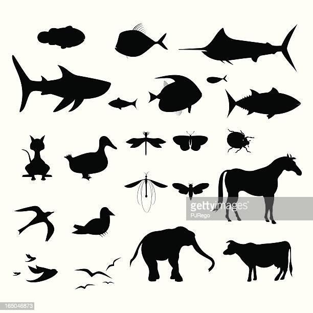 illustrations, cliparts, dessins animés et icônes de animal vertébré & animal invertébré silhouettes - cigale