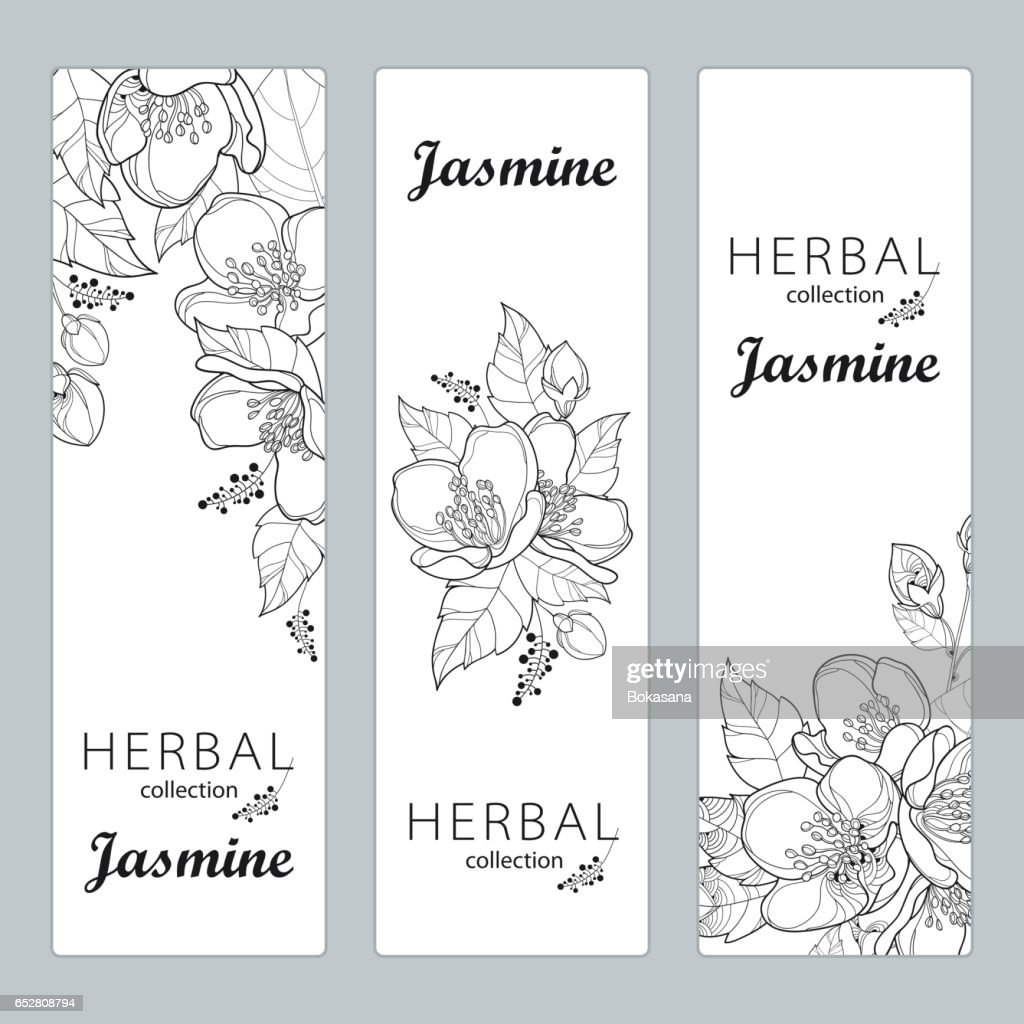 Vertical Templates With Jasmine Flowers Bud And Leaves Isolated On