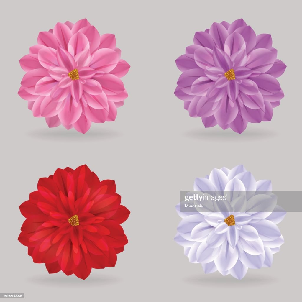 Vibrant Multi Color Lovely Chrysanthemum Daisy Flowers Vector Art