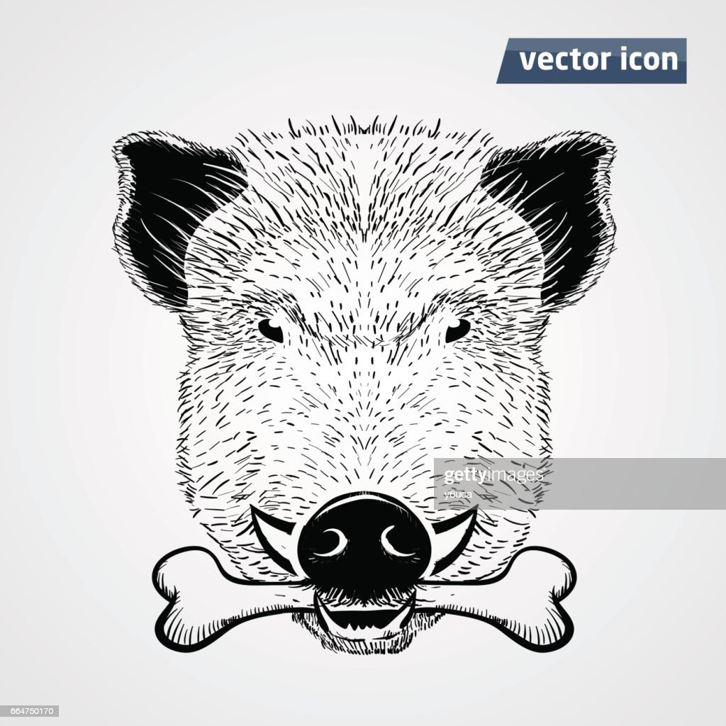 vild boar with boan vector illustration