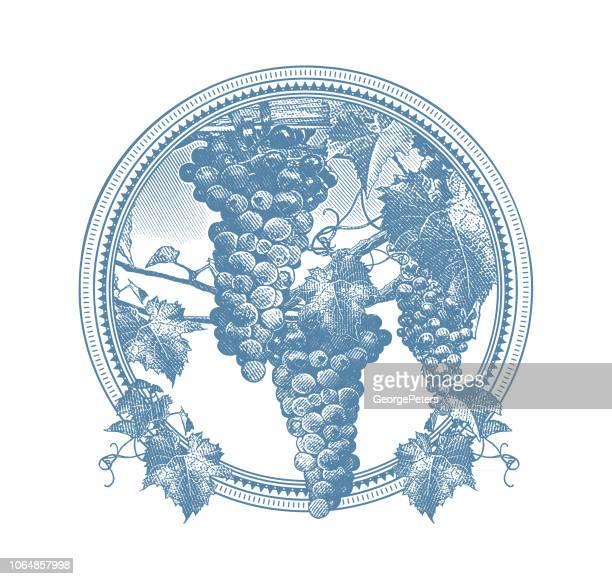 ilustrações de stock, clip art, desenhos animados e ícones de vineyard grapes circle frame - folha de parreira