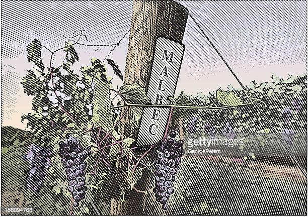 Vineyard Grapes Malbec