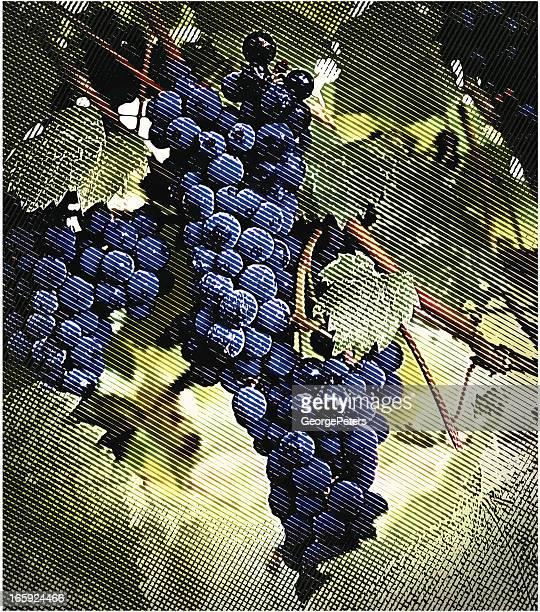 Vineyard uvas