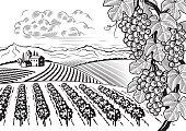 Vineyard valley landscape black and white