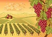 Vineyard valley landscape