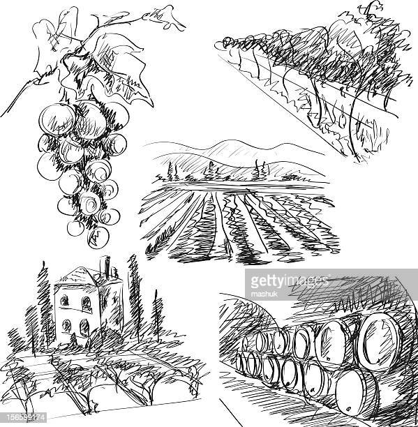 vineyard - grape stock illustrations