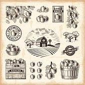 Vintage apple harvest set