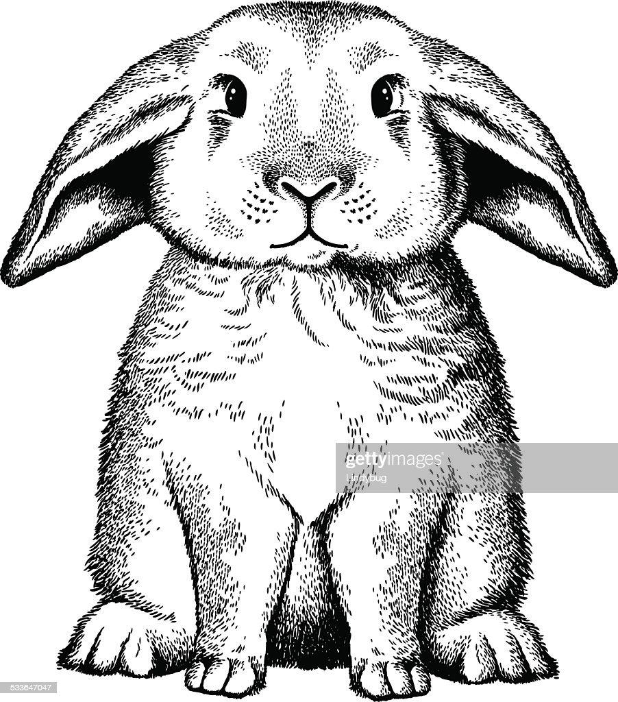 Vintage bunny sketch