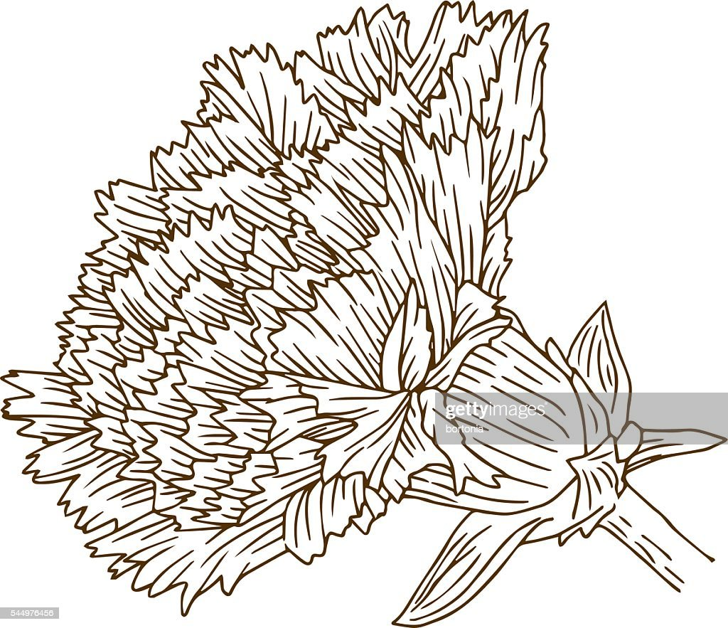 Vintage Carnation Flower Engraving Line Art