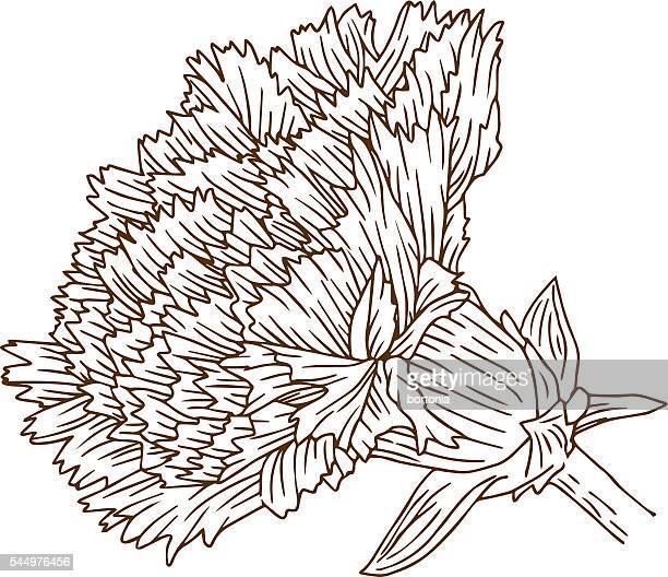 vintage carnation flower engraving line art - carnation flower stock illustrations, clip art, cartoons, & icons