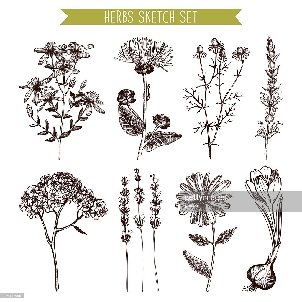 Vintage collection of herbal flowers illustration.