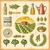 Vintage colorful olive harvest set
