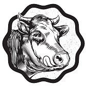 vintage cow's muzzle illustration
