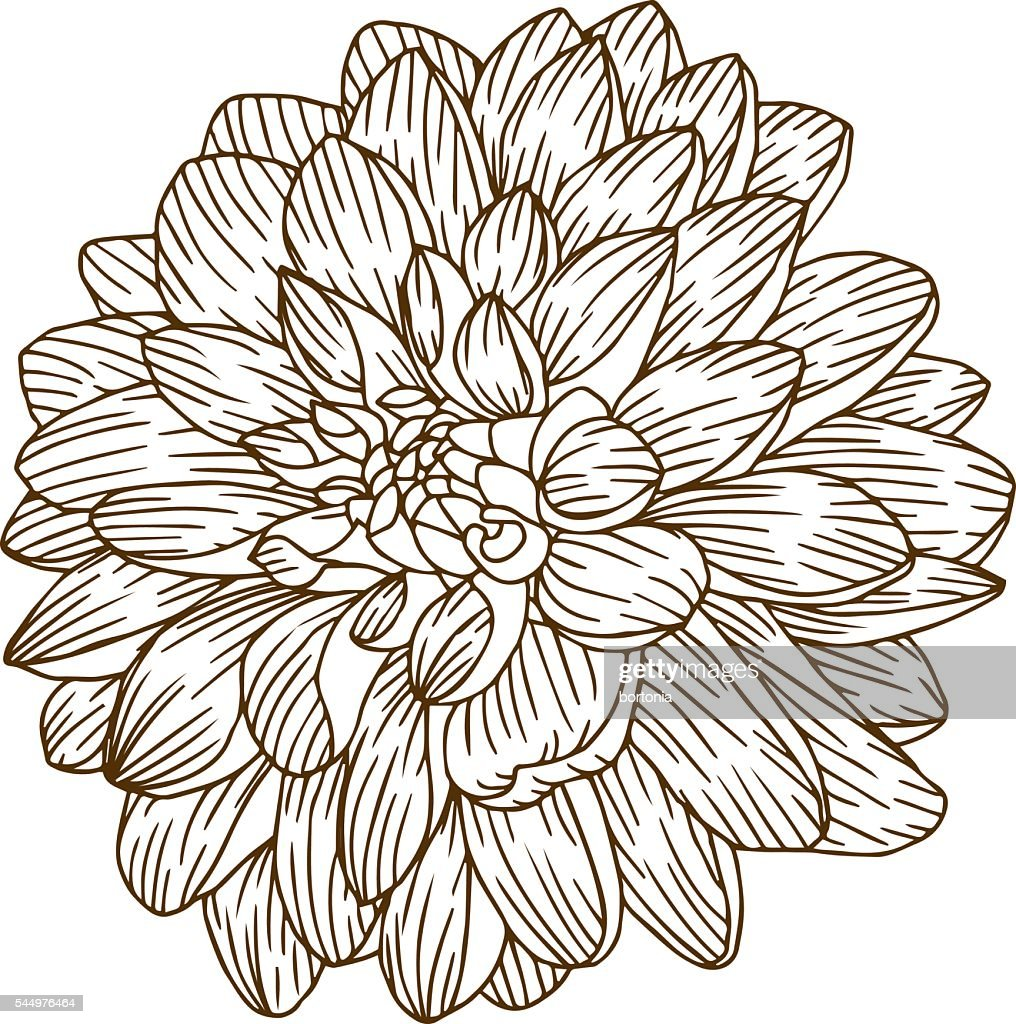 Vintage Dahlia Flower Engraving Line Art Vector Art Getty Images