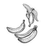 Vintage engraving banana.