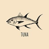 Vintage fish illustration in engraving style. Vector hand sketched tuna for logotype, label etc