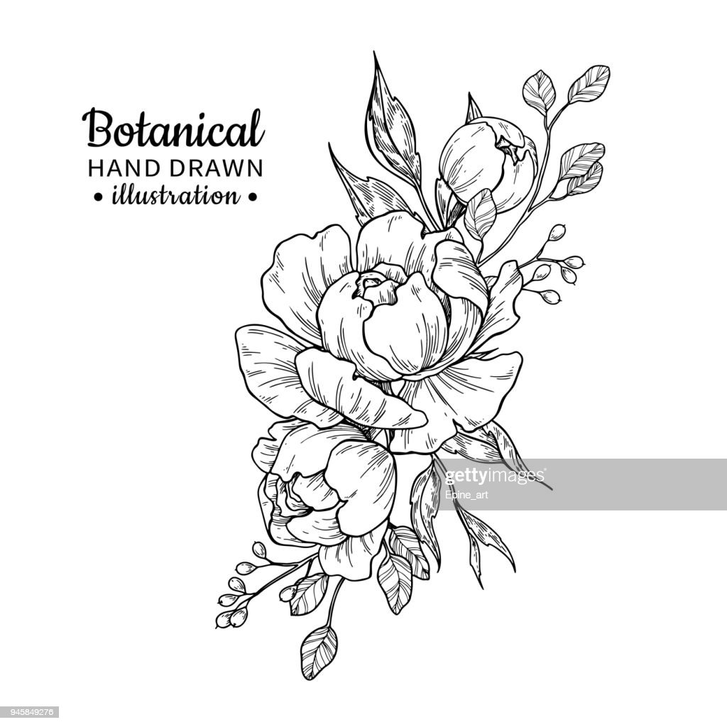 Vintage flower bouquet. Vector drawing. Peony, rose, leaves and berry sketch.