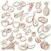 Vintage Fruit Contours