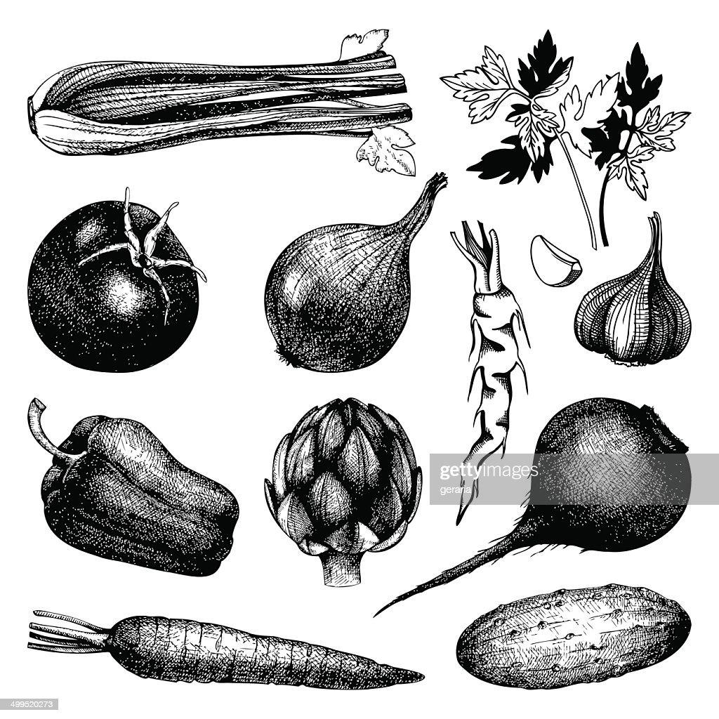 Vintage healthy food illustration isolated on white