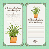 Vintage label with chlorophytum plant