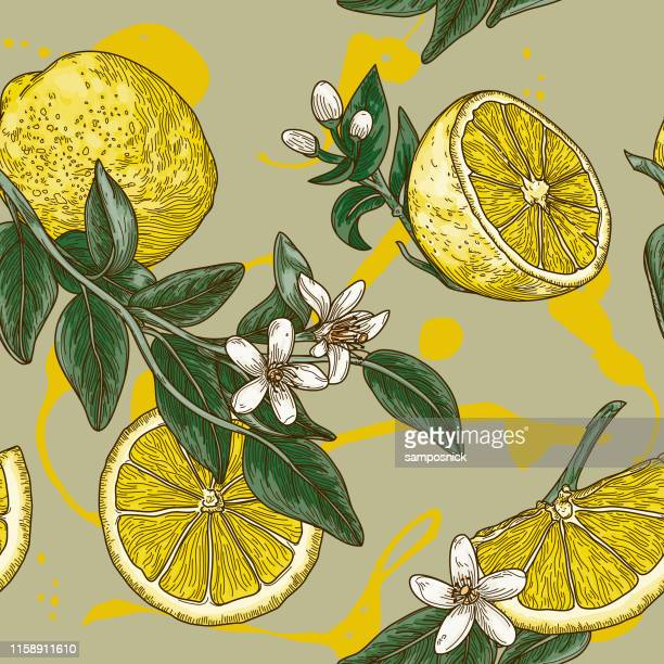 vintage lemon citrus blossom seamless pattern - floral pattern stock illustrations
