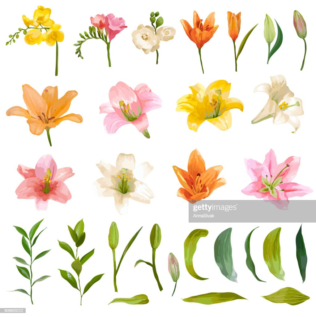 Vintage Lily and Rose Flowers Set - Watercolor Style