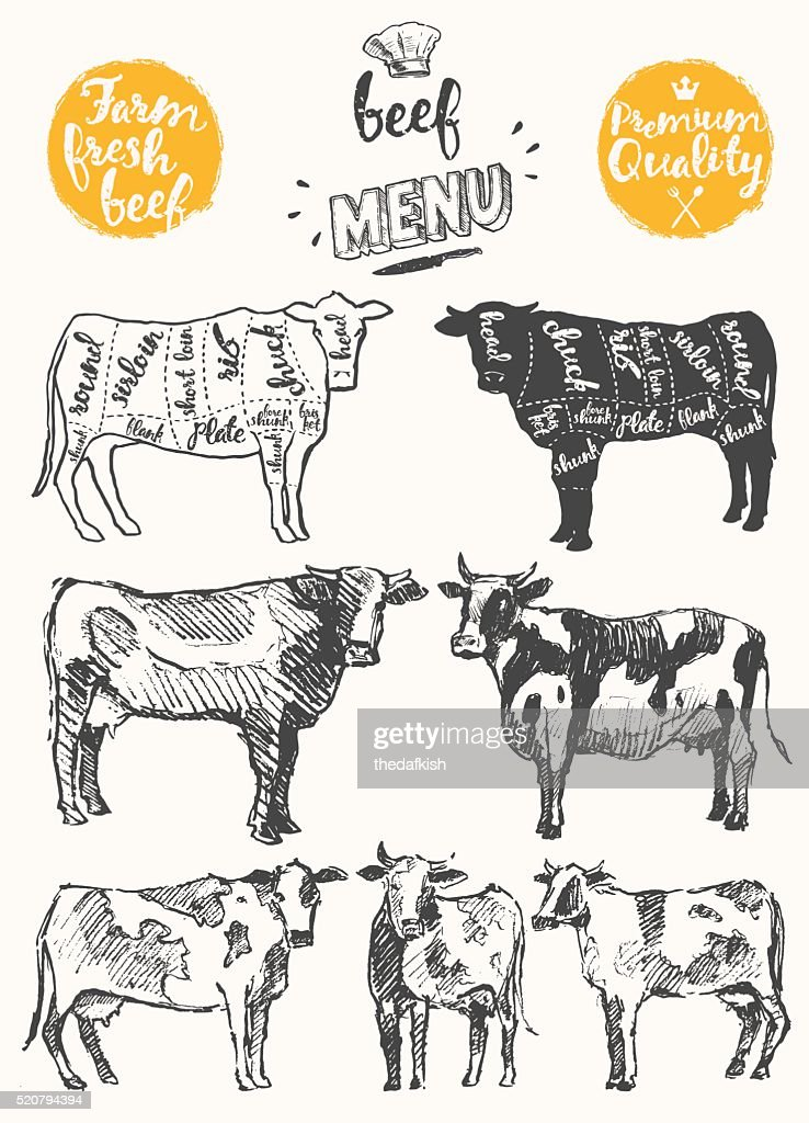 Vintage meat menu scheme beef cuts drawn vector