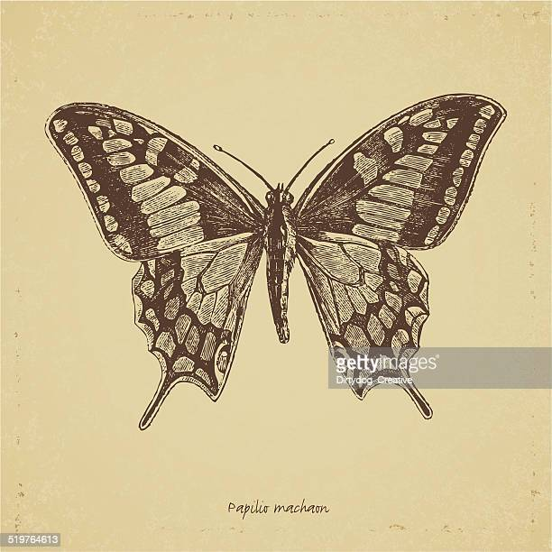 Vintage old butterfly etching on aged textured paper