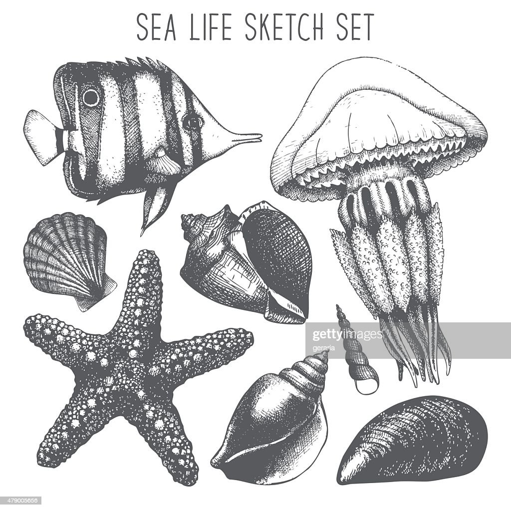 Vintage sea life illustration collection with engraving elements