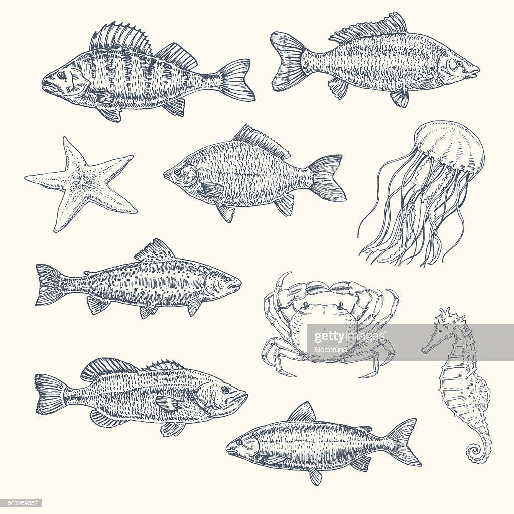 Vintage set of sea creatures. hand drawn illustration, sketch