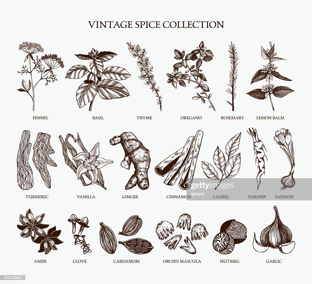 Vintage spice collection for your menu or kitchen design