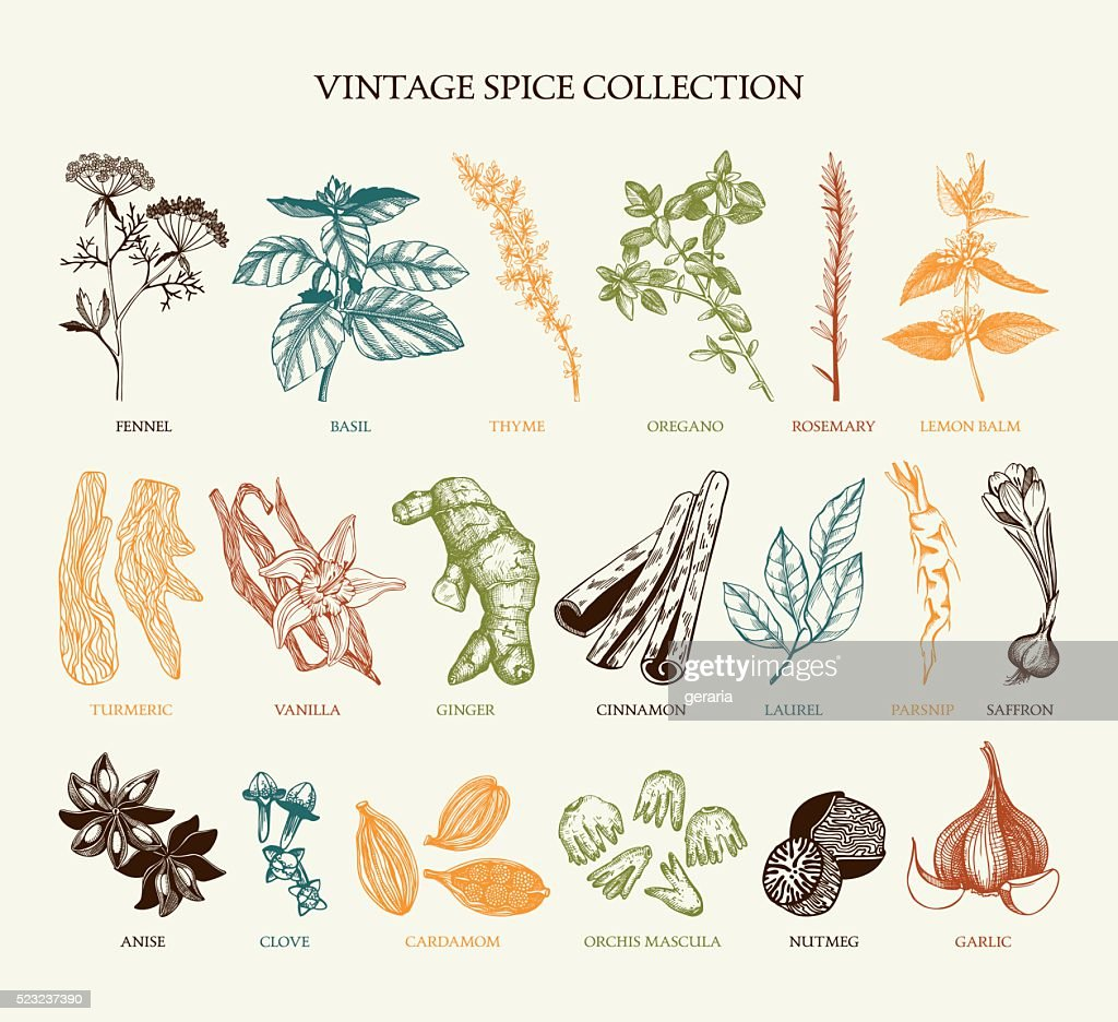 Vintage spice collection for your menu or kitchen design
