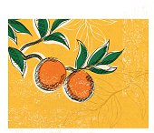 Vintage Style Advertising Oranges Poster