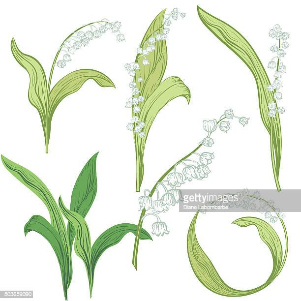 Lily Of The Valley Stock Illustrations And Cartoons