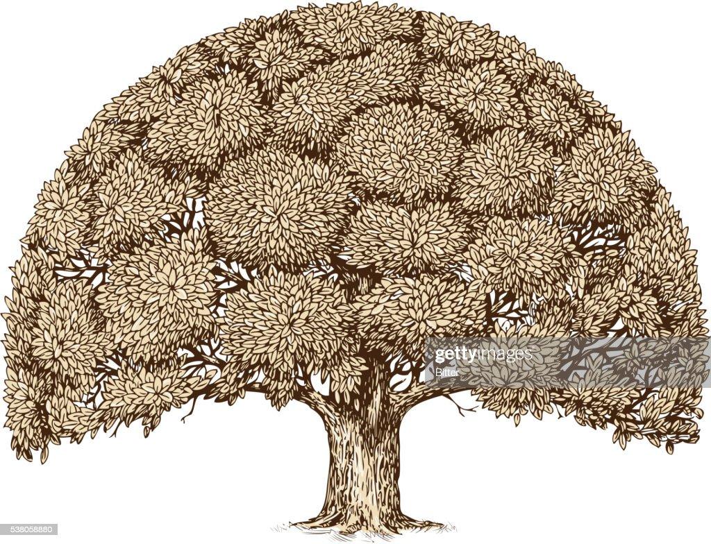 Vintage tree foliage. Hand drawn sketch old oak. Nature