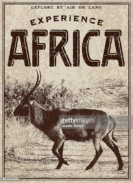 vintage victorian style classic experience africa advertisement - kudu stock illustrations, clip art, cartoons, & icons