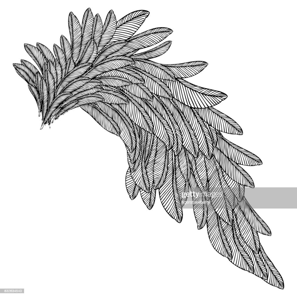 Vintage wing isolated on white background. Design elements for logo, label, emblem. Heraldic hand drawn wing for tattoo. Vector.