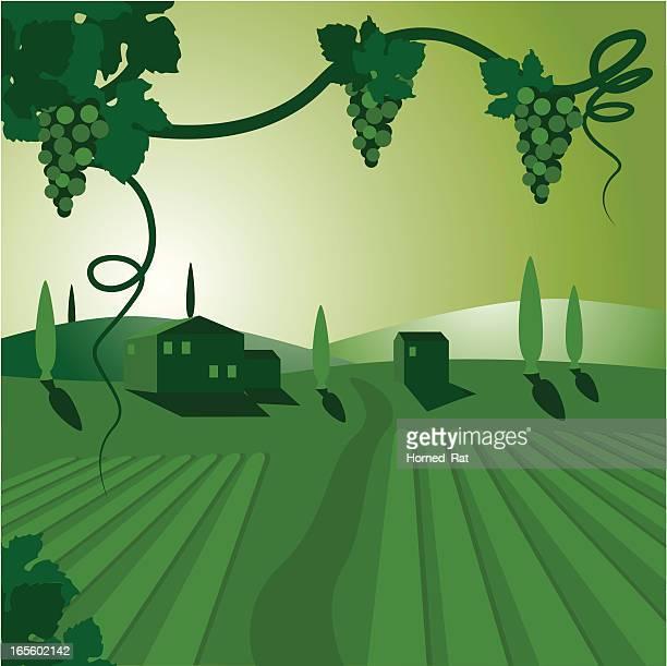 vinyard - barossa valley stock illustrations