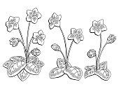 Violet flower graphic black white isolated sketch illustration vector
