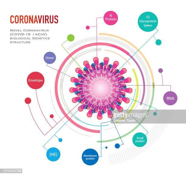 illustrazioni stock, clip art, cartoni animati e icone di tendenza di infografica del virus particule - materia