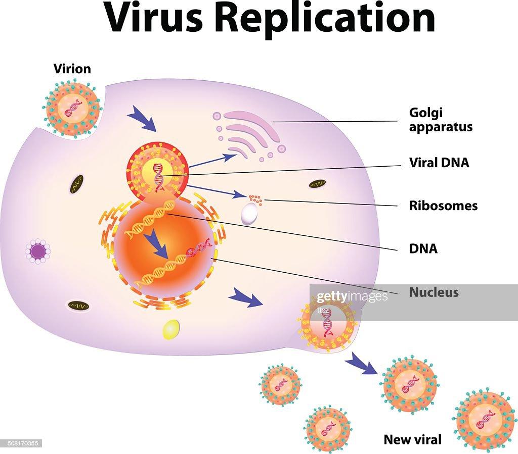 Virus Replication. Vector illustration