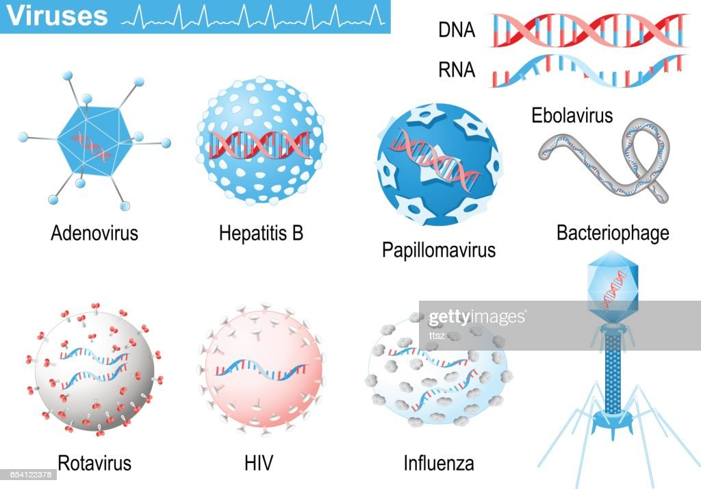 Viruses. RNA and DNA. Medical Infographic set with icons of viruses.