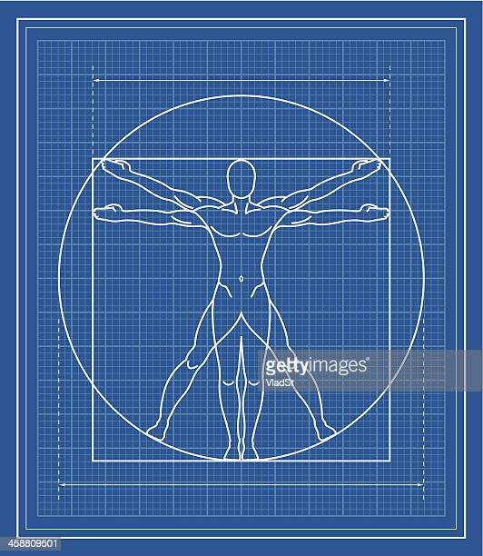 vitruvian man blueprint - the human body stock illustrations