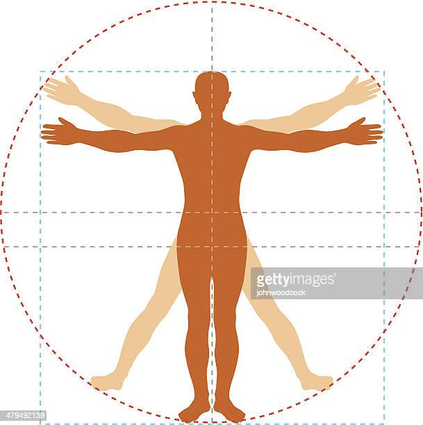 vitruvian man - the human body stock illustrations, clip art, cartoons, & icons