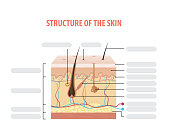 Vol.2 Structure of the skin info blank illustration vector on white background. Beauty concept.
