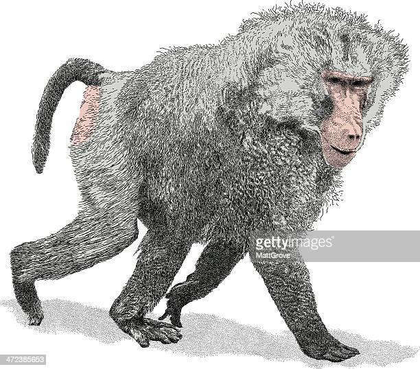 walking baboon - mandrill stock illustrations, clip art, cartoons, & icons