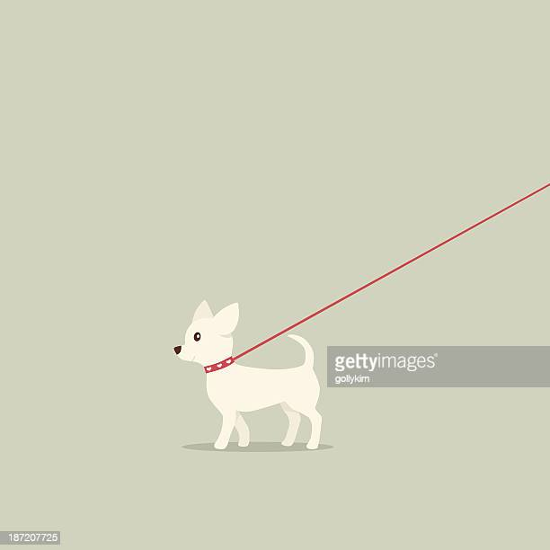 walking dog on lead chihuahua - dog leash stock illustrations, clip art, cartoons, & icons
