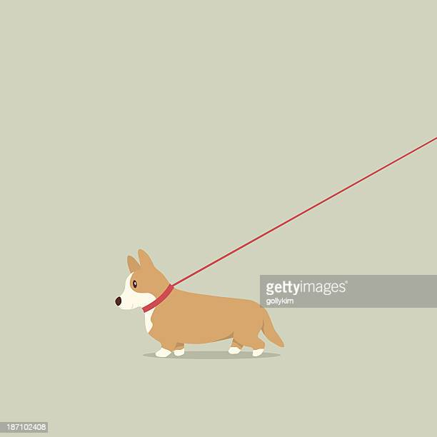 walking dog on lead corgi - dog leash stock illustrations, clip art, cartoons, & icons