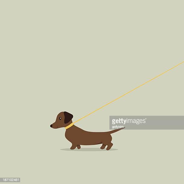 walking dog on lead dachshund - dachshund stock illustrations